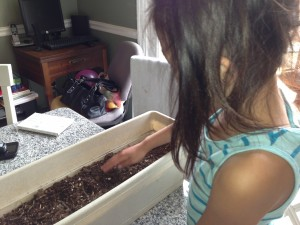 Then she covered the seed up and watered it.
